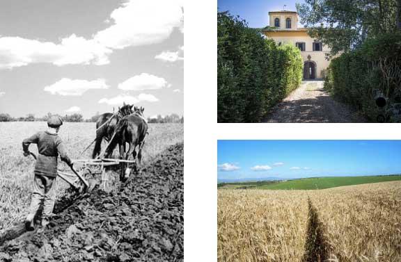 Azienda Agricola Sensi contadino